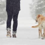 Homme qui marche dans la neige avec un chien