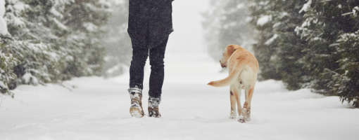 Man walking in the snow with dog